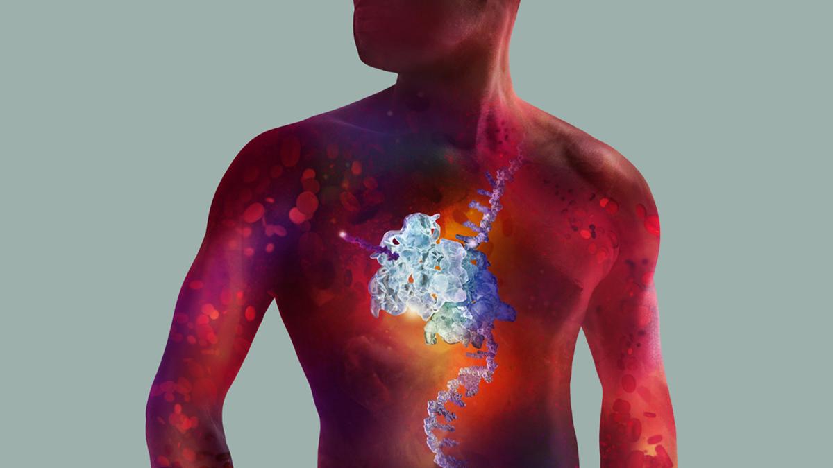 Vascular Regeneration